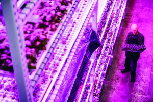 Green Sense Farms leads vertical innovation