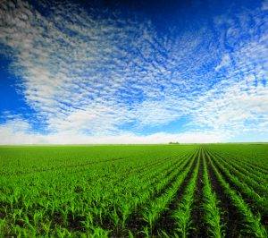 Indiana farming