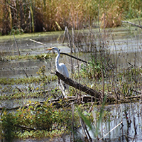 Westchester Migratory Bird Sanctuary