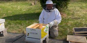 PNW Bees